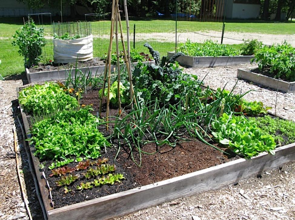 Photo of a strategically planted garden.