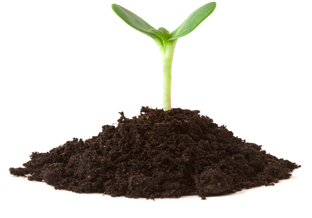 4 Improved soil and root structure result in plants with increased foliage that are healthy and robust, yielding more fruits, veggies and flowers.