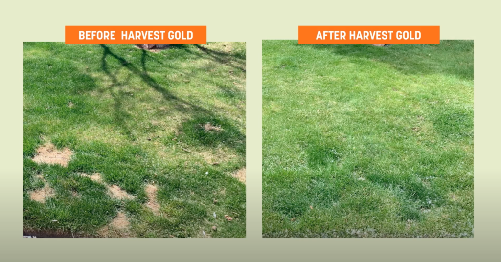 Lawn Care with Harvest Gold Organic