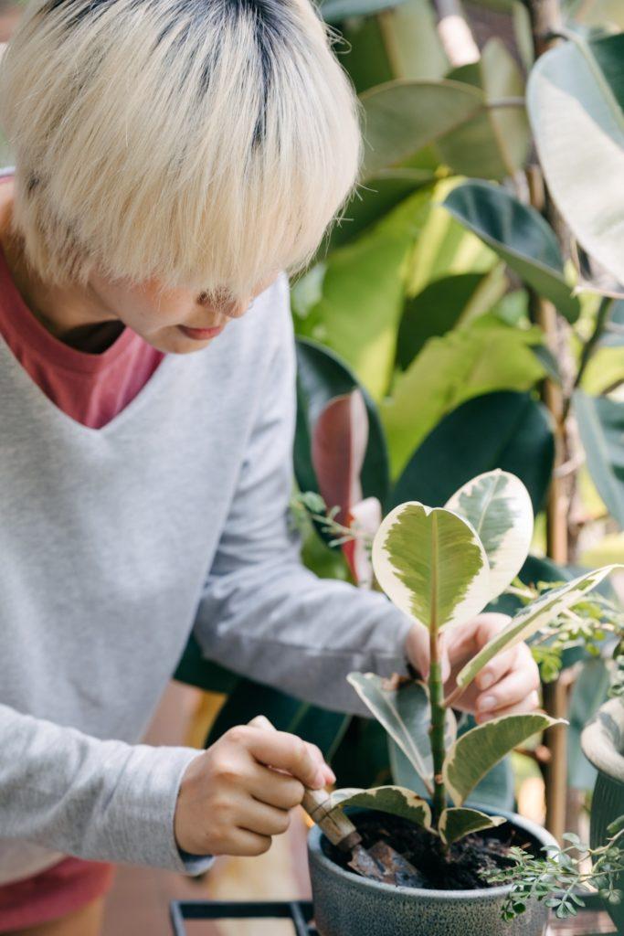 Harvest Gold Organics
