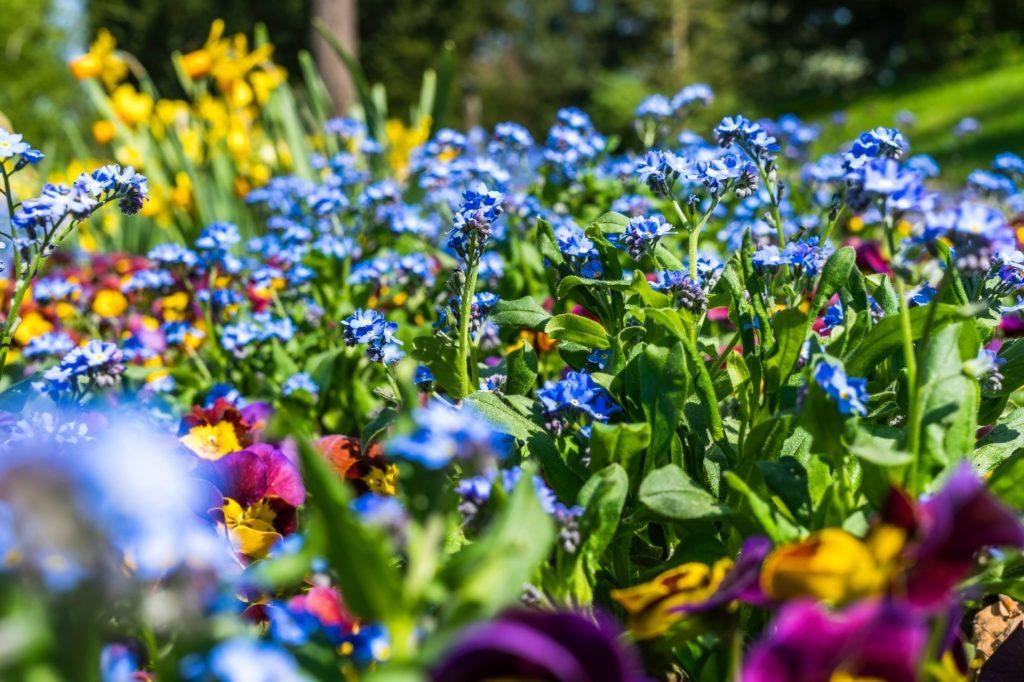 warm season annuals