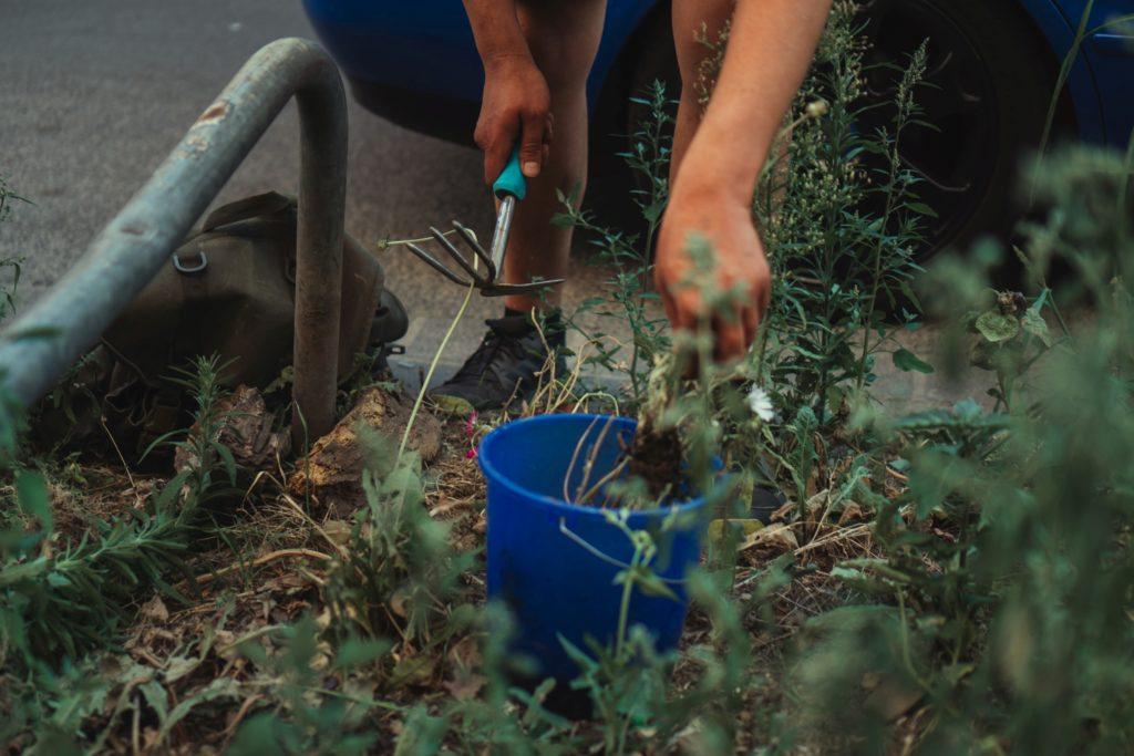 planting soil - Harvest Gold Organics
