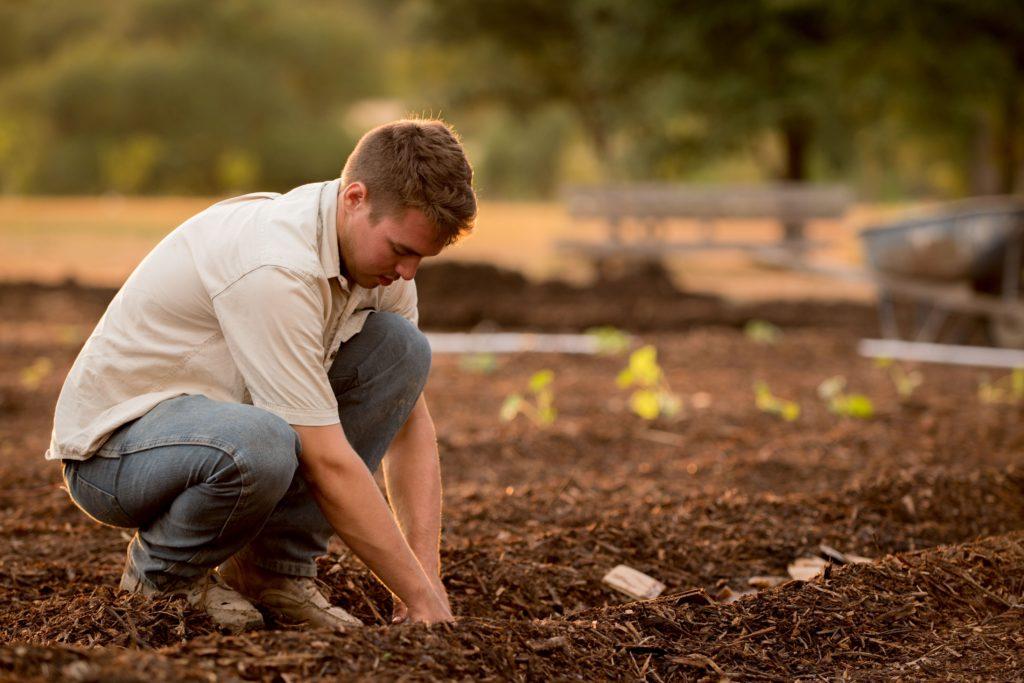 Planting garden seeds