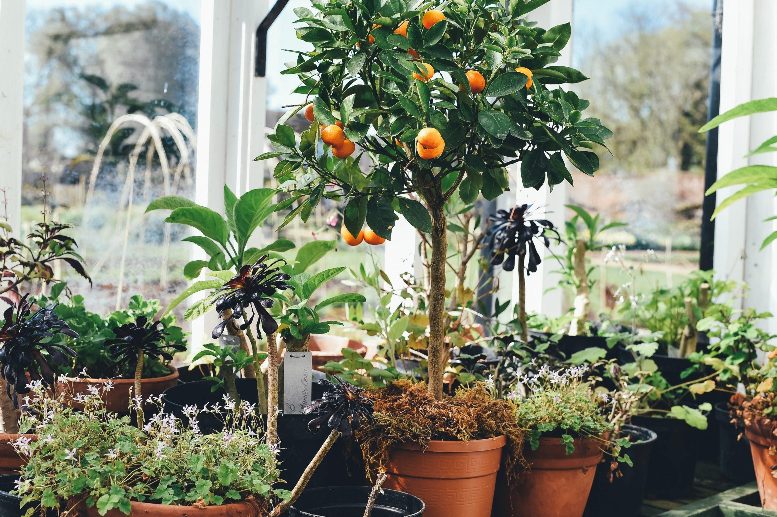 Indoor plants with Harvest Gold Organics